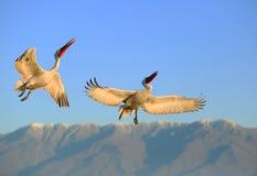 Het vliegen over de bergen Stock Afbeelding