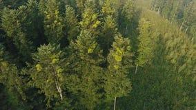 Het vliegen over de Bomen Verbazend bos van hommel stock video