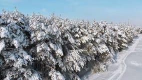 Het vliegen over de het bos en de sneeuwweg van de de winterpijnboom op een zonnige dag stock footage