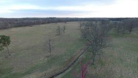 Het vliegen over de lentebos met roze eiken boom stock videobeelden