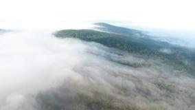 Het vliegen over de mist Verbazend bos van hommel stock video