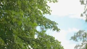 Het vliegen over de mooie bosbomen Landschapspanorama stock videobeelden