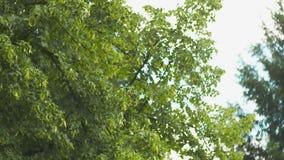 Het vliegen over de mooie bosbomen Landschapspanorama stock video