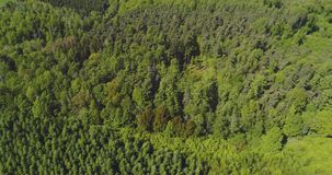 Het vliegen over de mooie bosbomen Landschapspanorama stock footage