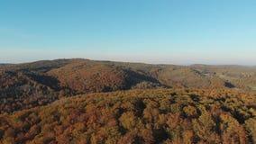 Het vliegen over de mooie zonnige bosbomen Luchtcameraschot Landschapspanorama stock video