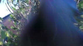 Het vliegen over de neerstorting van de landweghommel op grote bomen stock videobeelden