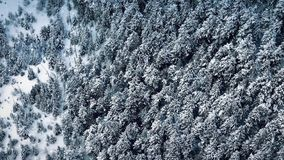 Het vliegen over Forest With Snow Falling stock videobeelden