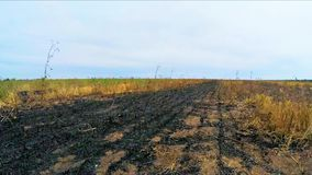 Het vliegen over Gebrand Stoppelveld Landelijk Gebied in Rusland stock videobeelden