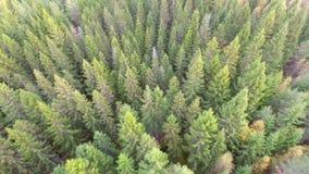 Het vliegen over groen bos stock videobeelden