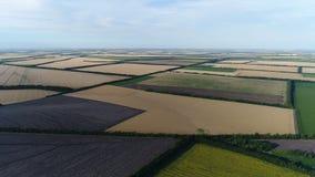 Het vliegen over landbouwgebieden stock video