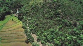 Het vliegen over padieveld en kokospalmen Luchtmening van rijstterras, landbouwgrond van landbouwers Tropisch Landschap stock video
