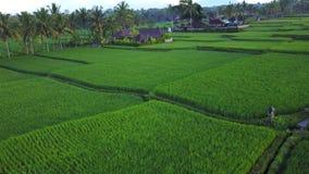 Het vliegen over padievelden stock video
