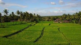 Het vliegen over padievelden in Bali stock video