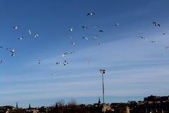 Het vliegen overzees-Miauwen over Edinburgh stock afbeeldingen