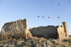 Het vliegen van Ansar Royalty-vrije Stock Fotografie