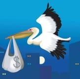 Het vliegen van de pelikaan Stock Afbeeldingen
