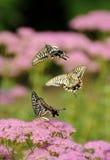 Het vliegen van de vlinder Stock Afbeeldingen