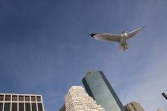 Het vliegen van de vogel   Royalty-vrije Stock Afbeelding