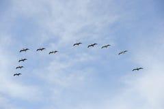 Het vliegen van vogels Stock Afbeeldingen