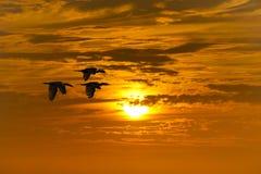 Het vliegen van vogels royalty-vrije stock foto
