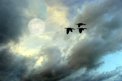 Het vliegen van vogels royalty-vrije stock fotografie