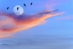 Het vliegen van vogels stock fotografie