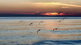 Het vliegen van zeemeeuwen Stock Foto's