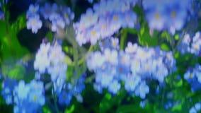 Het vliegen vergeet me over niet bloemenweide, inspirational luchtschot van de de lentezomer, indrukken, droom, prachtige wereld stock video