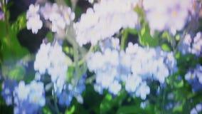 Het vliegen vergeet me over niet bloemenweide, inspirational luchtschot van de de lentezomer, indrukken, droom, prachtige wereld stock videobeelden
