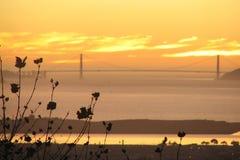 Het vliegtuig tree_SF bay_Golden Poort   stock fotografie
