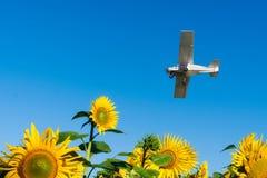 Het vliegtuig vliegt over het gebied van zonnebloemen Bevruchtende installaties Het bespuiten van pesticiden van de lucht De agra stock foto's