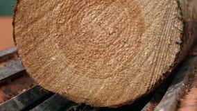 Het voeden logboeken aan transportband Transportband voor zwaar houtregistreren Logboekvervoerder stock footage