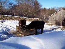 Het voeden tijd op de winterdag. Royalty-vrije Stock Afbeelding