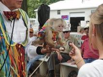 Het voeden van de aap Royalty-vrije Stock Foto