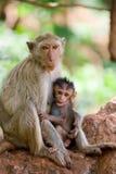Het voeden van de aap stock foto