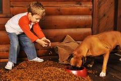 Het voeden van de Hond Stock Foto's
