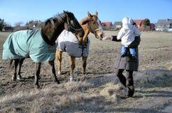 Het voeden van de paarden Royalty-vrije Stock Afbeeldingen