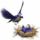 Het voeden van de vogel Stock Afbeelding