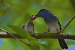 Het voeden van de vogel van de kindmonarch royalty-vrije stock fotografie