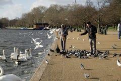 Het voeden van de vogels in Hyde Park, Londen, het UK Stock Foto