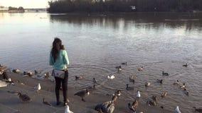 Het voeden van de Vogels te de Waterkant van Georgetown stock video