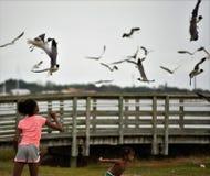 Het voeden van de Zeemeeuwen in Florida Royalty-vrije Stock Foto