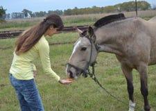 Het voeden van een paard Stock Afbeeldingen