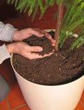 Het voeden van handen Stock Foto