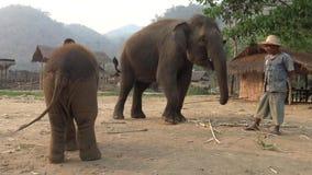 het voeden van 4K Mahout aan de Aziatische olifant en de baby in kamp van tropisch bos stock videobeelden