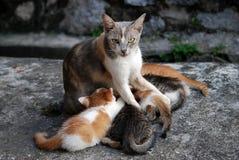 Het voeden van katjes Royalty-vrije Stock Foto