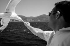 Het voeden van koekjes aan vliegende zeemeeuw in Griekenland royalty-vrije stock afbeeldingen