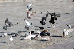 Het Voeden van vogels Stock Afbeeldingen