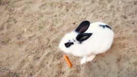 Het voeden van wat voedsel aan konijn royalty-vrije stock foto