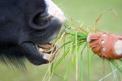Het voedende paard van het meisje Stock Foto